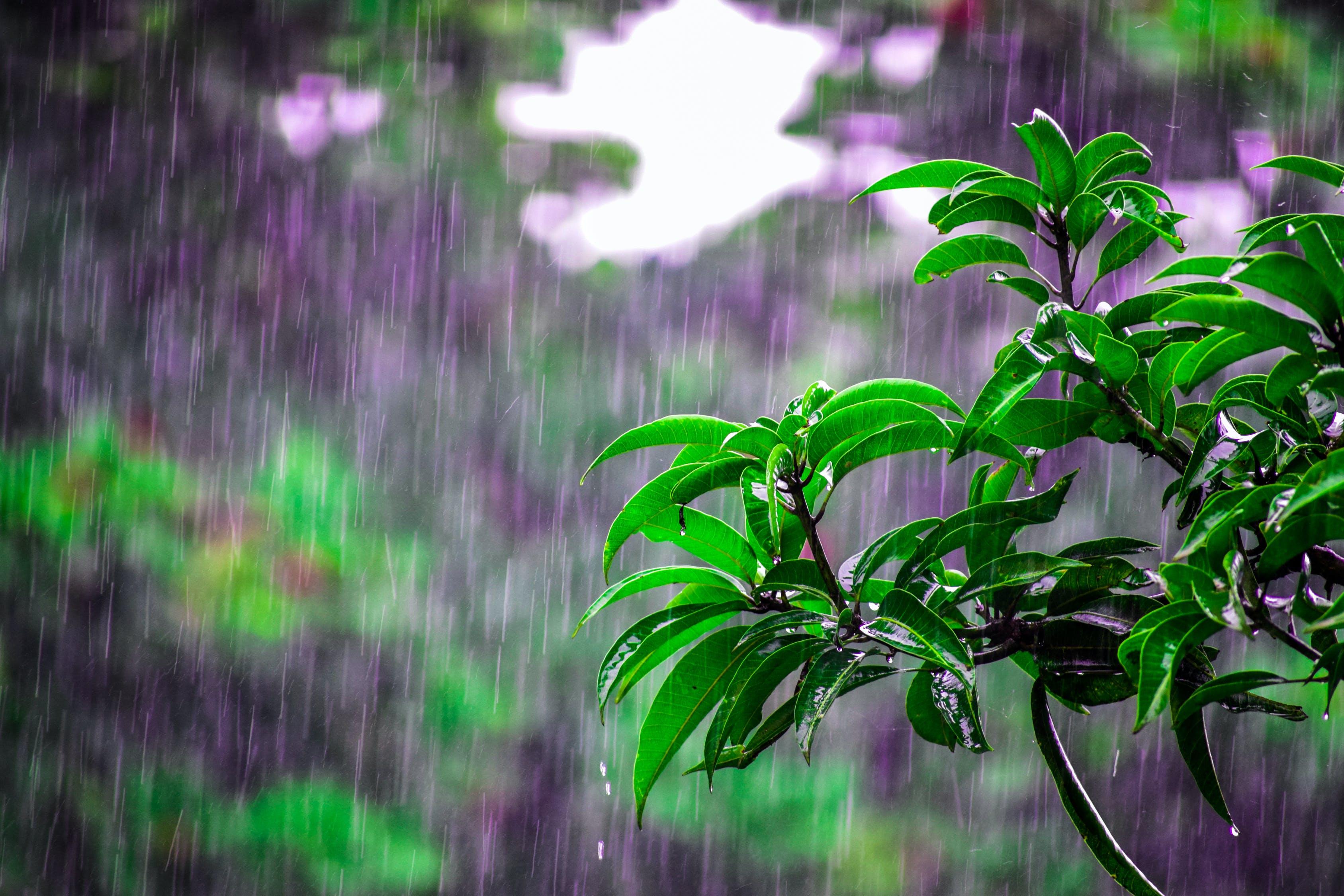 3 idées pour préserver la maison de la pluie pendant l'été