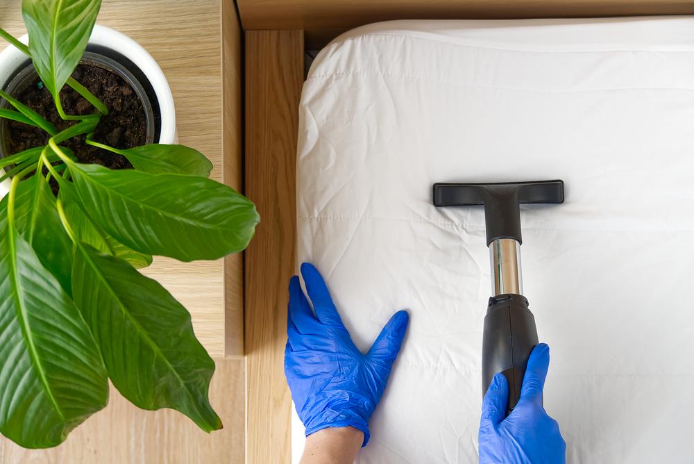 Comment se débarrasser des acariens sans avoir recours aux produits chimiques?