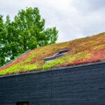Tout savoir sur les systèmes de toits verts écologiques